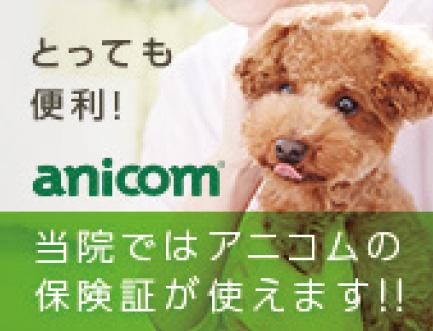 アニコム傷害保険株式会社
